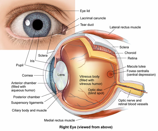 Learn more about common pediatric eye conditions